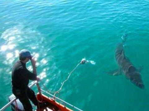 男子挽救了这条鲨鱼,鲨鱼的报恩方式让人震惊!