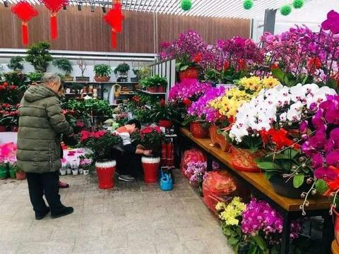 自制花肥养花卉,节能环保又好闻,网友:比买的化肥好使!