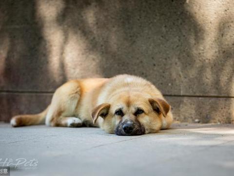 皮肤病可能造成狗狗死亡?给你五个经验分享,让狗狗健康成长