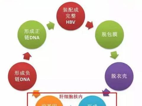 预防乙肝反弹,尽量不饮酒和监测病毒标志物,愉快轻松过小年