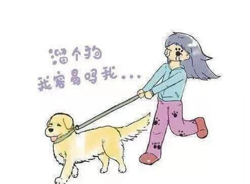 养狗:遛狗别犯五个错误,很伤狗的