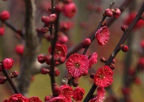 腊去寒消河柳翠,春来水暖岸花香