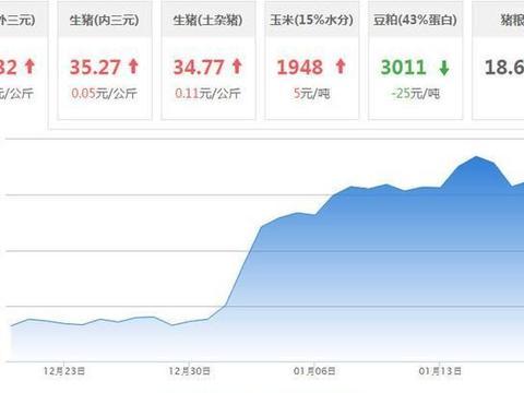 「每日猪价」1月19日全国生猪价格一片飘红,23省市猪价上涨!