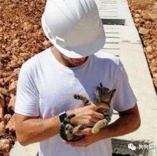 小哥路上捡到流浪幼猫,送人无果后将收养在家,最终被小猫征服…