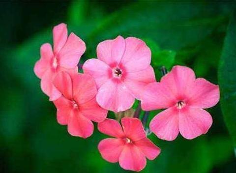阳台不知养啥花?不妨养这几款花,比绿萝好养,花色鲜艳又迷人