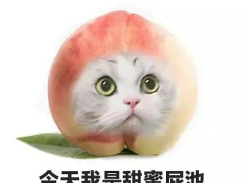 为何这只猫甘愿流浪