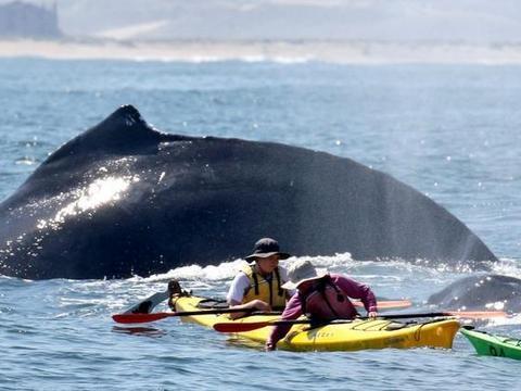 男子去海边旅行,看见两头鲸鱼紧跟游客身后,立马用相机拍了下来