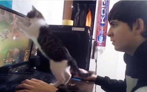 铲屎官移情别恋爱上了游戏,猫咪使出浑身解数只为引起主人的注意