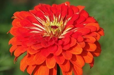 阳台养此款花卉,花枝招展,花开鲜艳美丽,瞬间变成温馨小花园