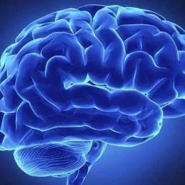 母语不同或致脑疾患者语言能力差异