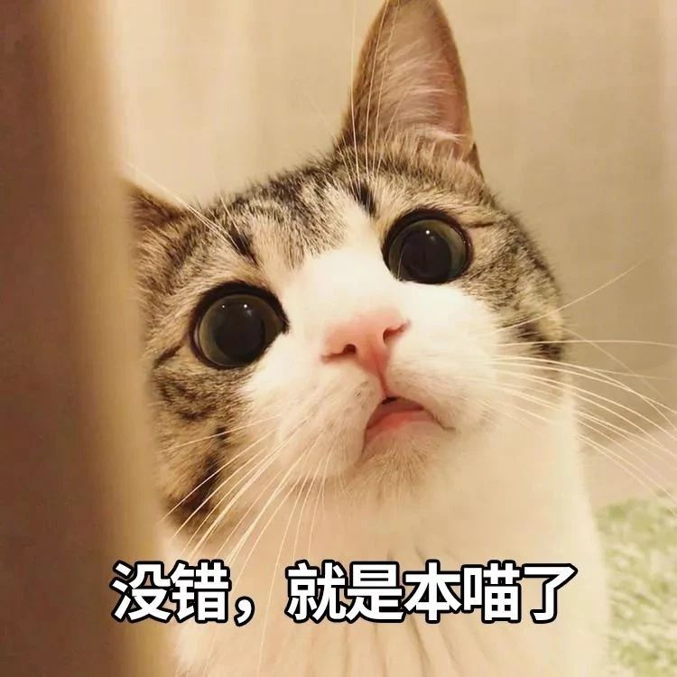 【趣闻】十二生肖为何没有猫?面对孩子的提问,家长可以这样回答