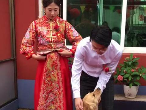 新郎新娘正和来宾合影拍照,金毛非要来凑凑热闹,太可爱了