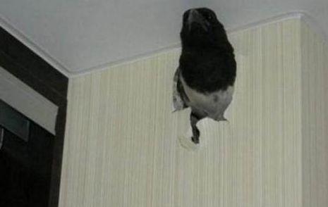 女子家里墙壁出现奇怪黑洞,把墙拆掉后上前一看,顿时傻眼!