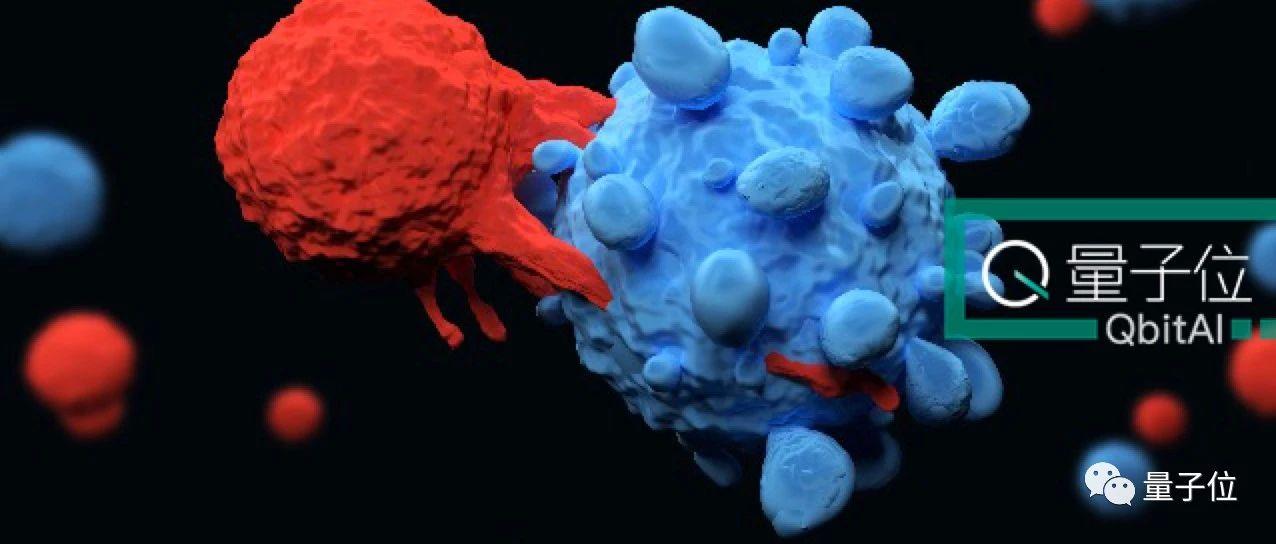 新发现的免疫细胞,可治疗现有多种癌症还不掉头发!最早11月进行人体试验   Nature免疫学