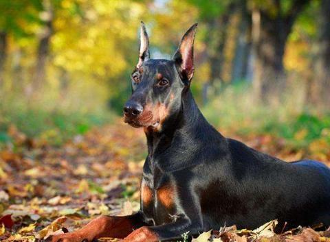 """6大狗狗,是狗界中的""""长腿欧巴"""""""