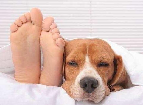 """为何狗狗总爱""""上床""""睡?6个原因,你要了解"""