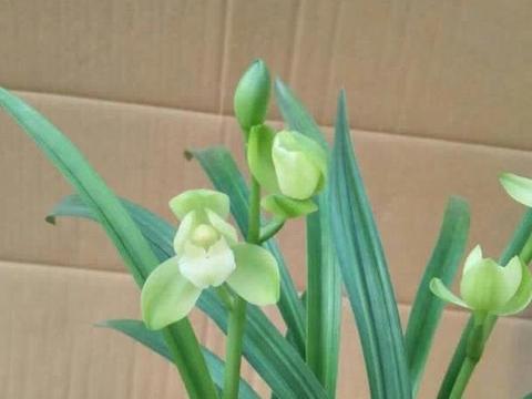 这4种兰花最常见,开花高端有档次,淡淡花香比香水还好