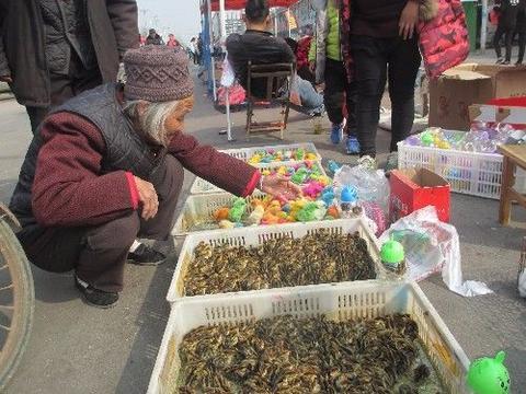 农村大娘被忽悠买10块钱一只的染色小鸡,小商贩确说没赚钱