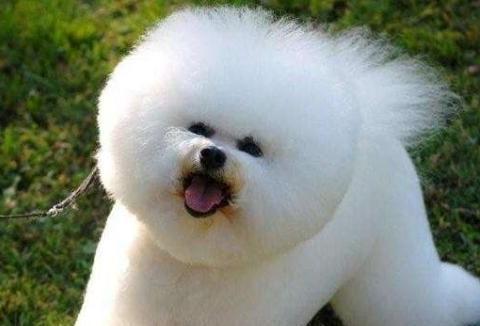 目前流行的10种宠物狗,你的爱犬也在里面吗?