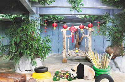熊猫吃饺子 年饭新滋味