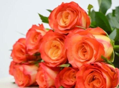 """喜欢菊花,不如养盆玫瑰""""金辉玫瑰"""",寓意快乐俏皮,清秀淡雅"""