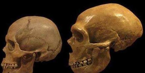 欧洲人的祖先异常聪明,5万年前就会制造强力胶,可惜聪明反被误