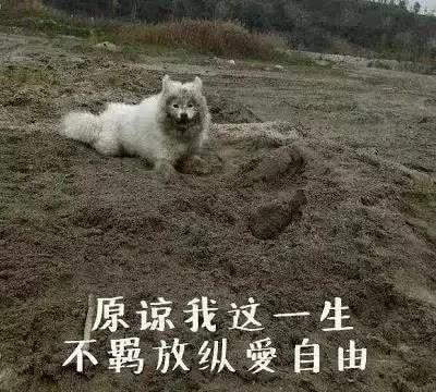 带狗子回农村就能幸福过年?它们最后都会成为这幅德行……