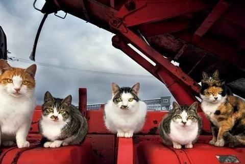 北海道的冬天,流浪猫们的生活却是这样子!