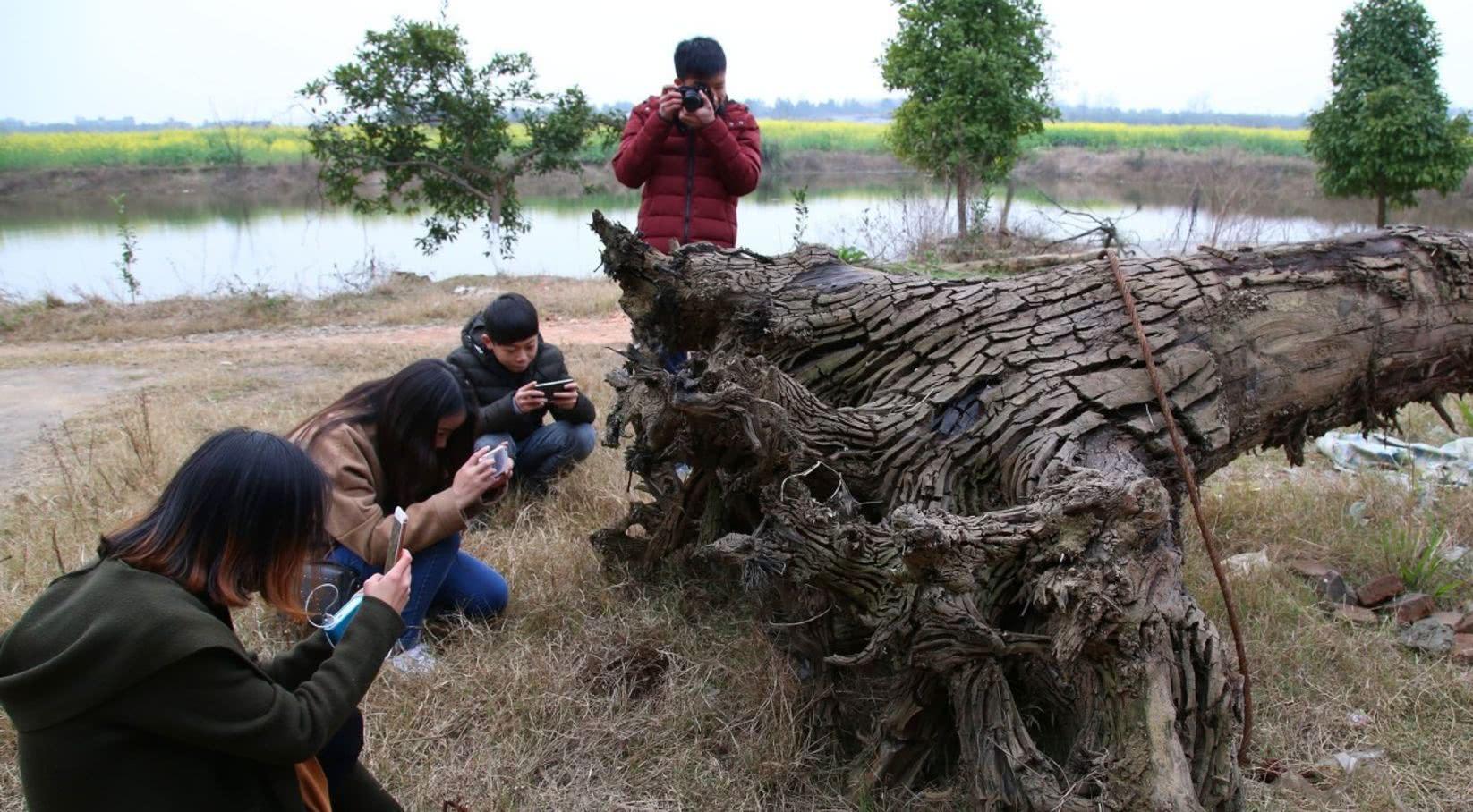小伙河里挖掘楠木,富豪出价十万元不愿卖,如今却无人问津