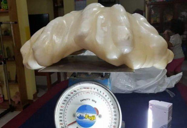 渔民曾捕获到一只大蚌壳, 取出不明物体放床下10年, 如今价值不菲