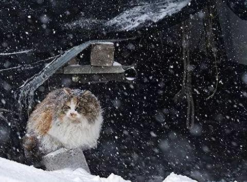 零下十几度的北海道冬天,流浪猫们的生活居然这样的!网友:羡慕