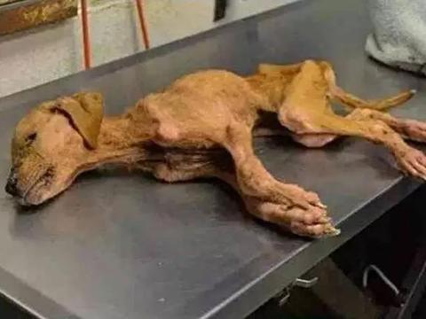 流浪狗瘦成皮包骨,被自闭症儿童收养后,奇迹发生了