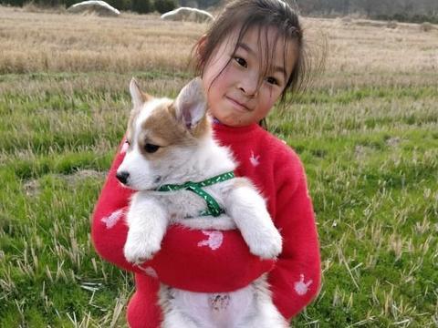女儿特别喜欢柯基,本想把它寄养在宠物店,她却非要带回家