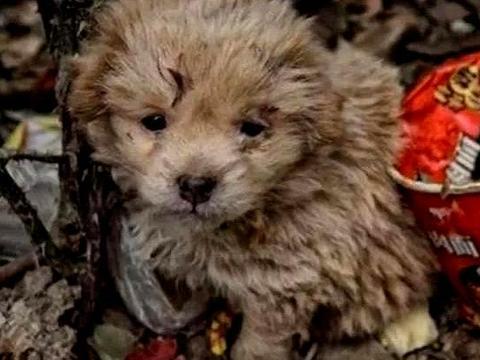 小流浪狗拒绝被收养,好心人好奇跟去一看,瞬间红了眼