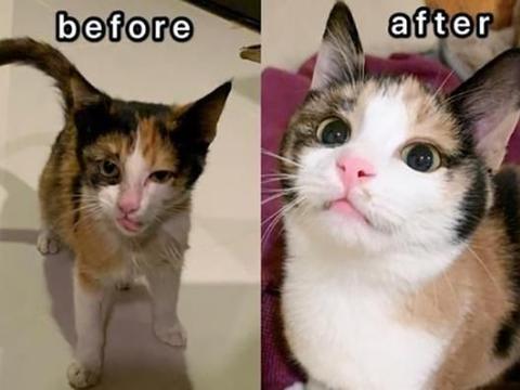 网友领养干瘦流浪猫,三个月竟蜕变成小美猫