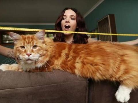 情侣养猫增进感情,却不小心养出猫界姚明,还破了世界纪录