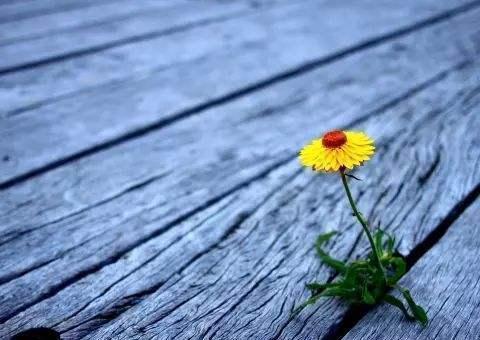 抑郁症:家属陪伴的路上不要消极,这是持久战!乐观积极才是一切