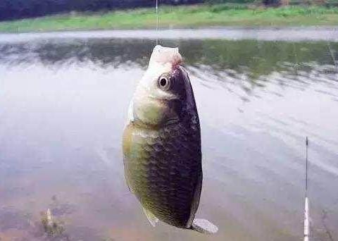 资深钓友教你冬季在小河钓鲫鱼,钓竿的选择与钓组有技巧