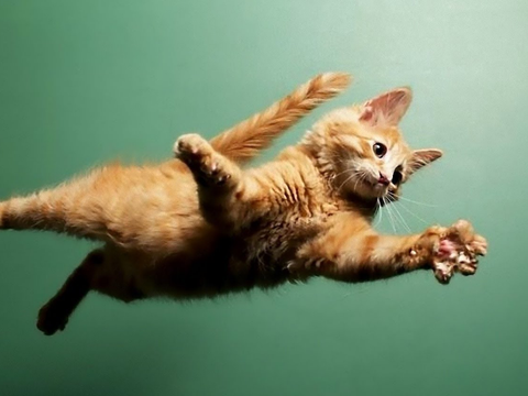 """从高处掉下的猫咪没问题?6楼是界限,达到""""终端速速""""后有危险"""