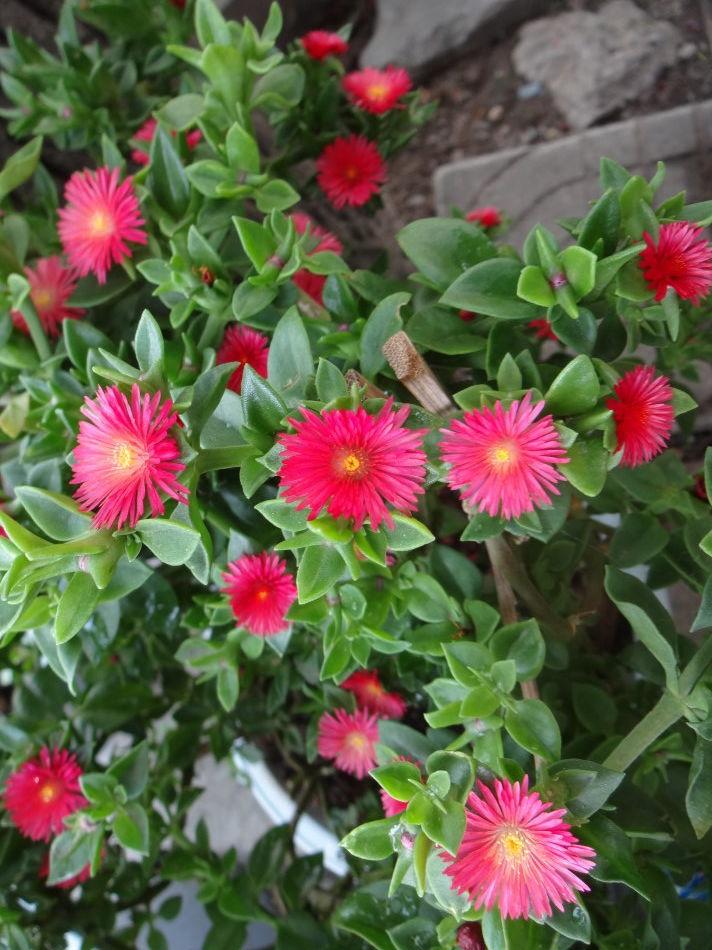 天堂鸟 天堂鸟,学名鹤望兰,旅人蕉科多年生草本植物,原产于非