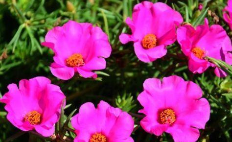 """喜欢玫瑰,就选""""高端品种""""彩纸口红,花开似唇彩,娇艳欲滴!"""