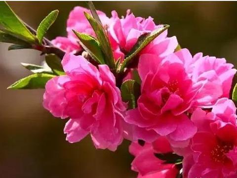 春天几种芳香型花卉,气味儿扑鼻,花色好看观赏价值高!