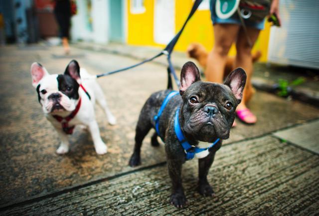 狗狗们是如何进行交流的?它们会用什么方式,去表达自己的情绪