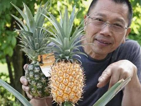 男子在英国花4年种菠萝,1个值9万却不卖,而网友却出招致富