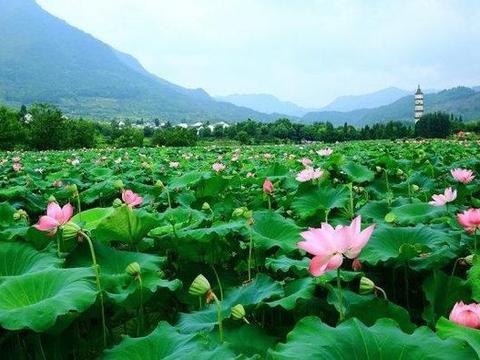 杭州这村的人基本姓叶,《爸爸去哪儿》拍摄地,景美游人少