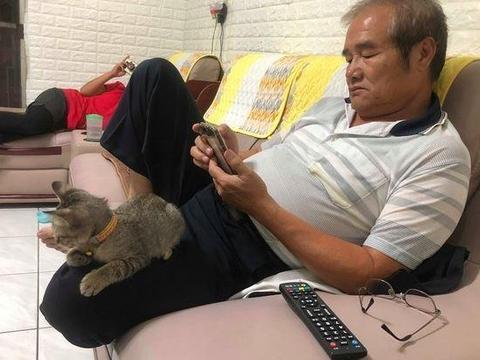 刚把猫咪带回家,爸妈还威胁有它无我,两个月后却整天围着猫咪转
