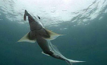 潜水员在深海潜水,出现一生物让他迈不动步伐,慌忙用摄像机拍下