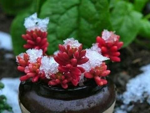 室内过冬的多肉植物什么时候恢复露养比较好?
