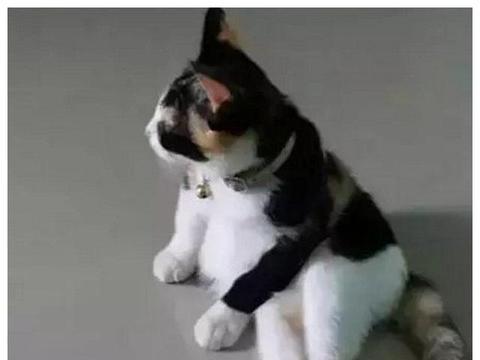 朋友买了只猫,非要我去看看,然后我被笑的直不起腰了!