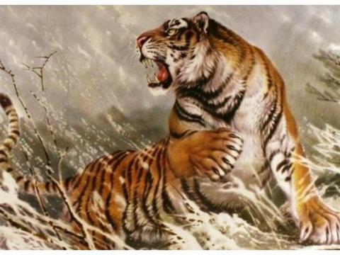 生肖虎的优点和缺点是什么?